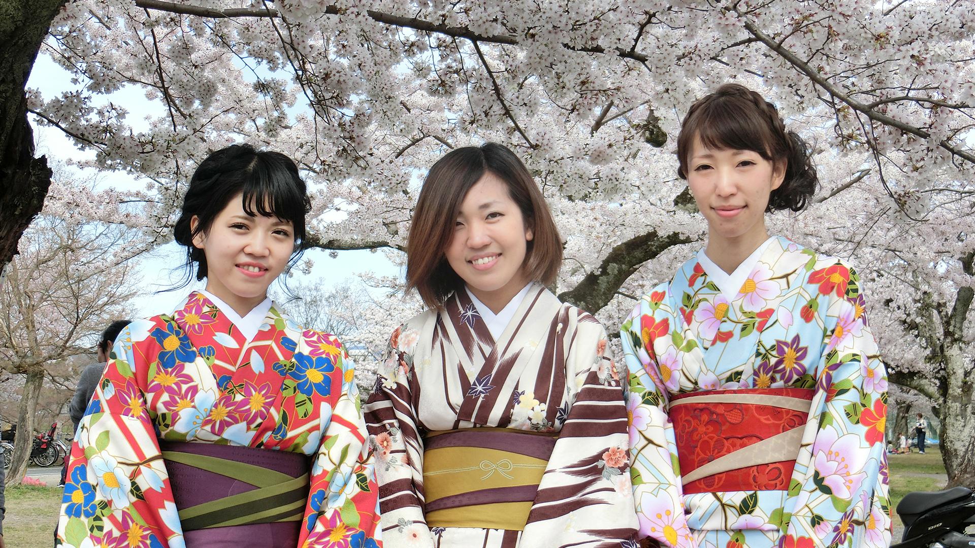 Japan Körsbärsblomning